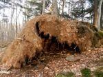 Potluck woods photos: #1