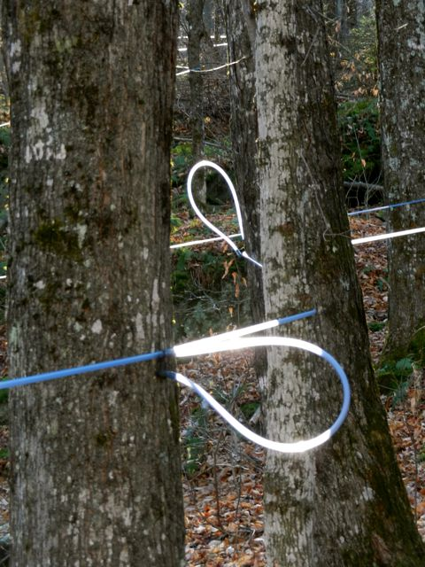 Neon tubing - but does it really disappear into the tree?